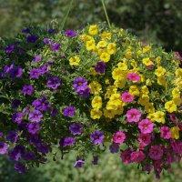 Цветы лета :: Ольга