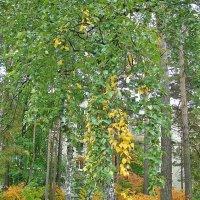 Грустная осень :: Лидия (naum.lidiya)