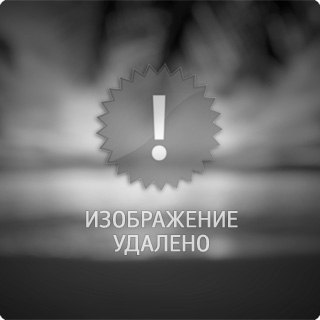 Bee on a purple flower :: Andrii Kazun