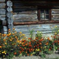 Бабье лето в Пирогово :: Сергей Рубан