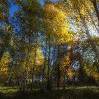 осени пожар :: Андрей Афонасьев