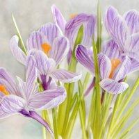 Весенний цвет :: Татьяна Зема