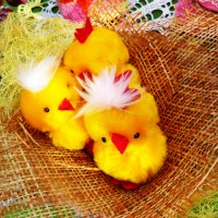 Цыплятки :: Надежда