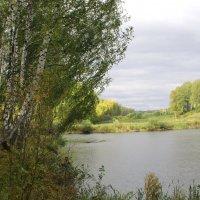 Сельский пруд осенью. :: Борис Митрохин