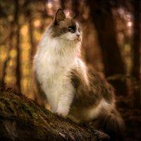 Кот в лесу :: Алексей Строганов