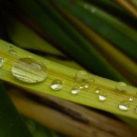 капли дождя :: Александра Тетерина