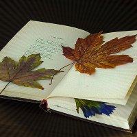 Осень воспоминаний :: Мария Богуславская