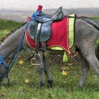 А пони тоже кони :: Игорь Сикорский
