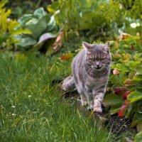 Кто это на моем огороде ходит? :: Дмитрий