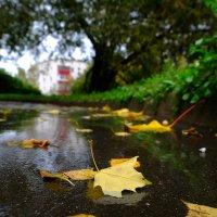 Осень в моём городе :: Андрей Михайлин