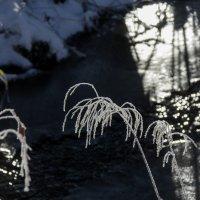 Пальмы сибирских тропиков :: Алексей (АСкет) Степанов