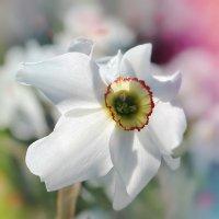 Весна :: Наталия