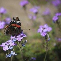 Бабочка в октябре. :: Барбара