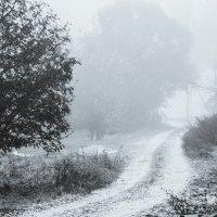 туман на улице :: Тася Тыжфотографиня