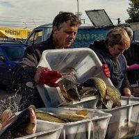 Живая рыба... :: Ирина Зайцева
