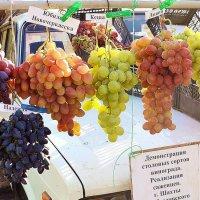 Шахтинский виноград :: Владимир Болдырев