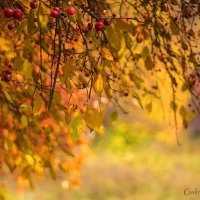 Золотая Осень... :: Галина Стрельченя