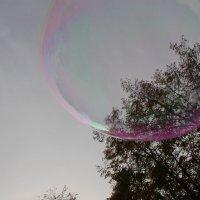 Летит по небу осенняя мечта.... :: Tatiana Markova