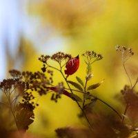 Осень :: Иван Лазаренко