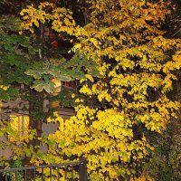 Осень, что-ли? :: Андрей Лукьянов