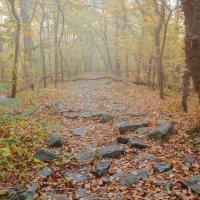 Утренний лес :: Artem Zelenyuk