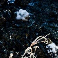 Травы. Робкие шаги зимы :: Алексей (АСкет) Степанов