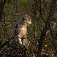 Осенний кот :: Ирина Дикая