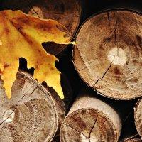 Осень :: Ольга Мальцева