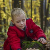 грибная осень :: Андрей Бедняков