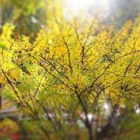 Осенние листья :: Валентина Ломакина