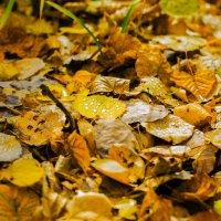 осеньняя роса :: Инна