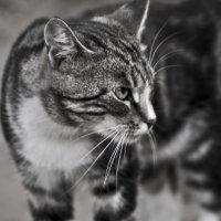 Эй, не стойте слишком близко .... Я тигренок, а не киска !!! :: Ольга Винницкая