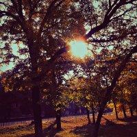 Холод. Чай. Тёплый плед. Книги. Осень. Октябрь... :: Valeriya Voice