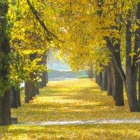 Осенняя аллея освещенная солнцем :: Сергей Тагиров