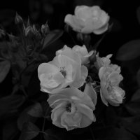 Flowers :: Екатерррина Полунина