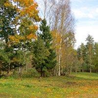 Осенняя пора :: Светлана