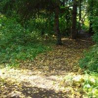 Дорожками ботанического сада :: марина ковшова