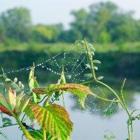 Смотрю на лето сквозь жемчужные узоры паутины. :: ольга хадыкина