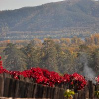 Осенняя пастораль :: Albina