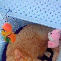 У кошек тоже есть характер))) :: Татьяна Королева