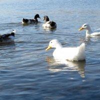 На озере :: Наталья Джикидзе (Берёзина)