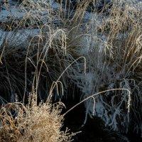 Плакучие травы Борискина ручья :: Алексей (АСкет) Степанов