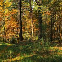 Лесов осенние рассказы... :: Лесо-Вед (Баранов)