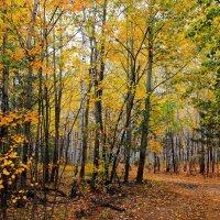 Опадают с грустью в память листья... :: Лесо-Вед (Баранов)
