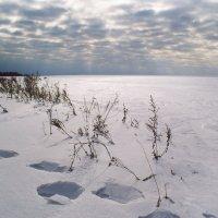 winter :: Анна Крюкова