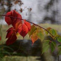 Осенняя палитра. :: Paparazzi