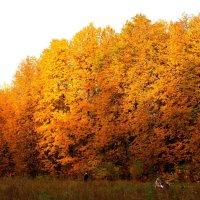 Осень в парке. :: Борис Митрохин
