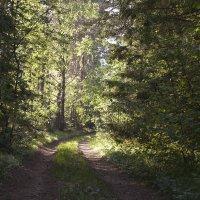 В лесу... :: анна нестерова