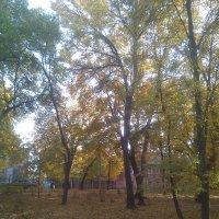 И только шелест листьев слышен :: Tarka