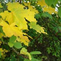 Осенние листья :: марина ковшова